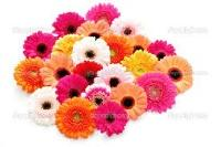 Gerbera Flower,carnation Flowers,strawberry