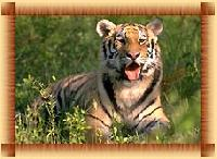 Indian Wildlife Tour Services