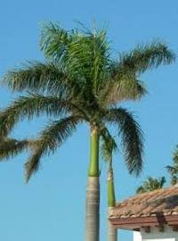 Grown Up Palm Trees