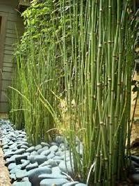 Live Outdoor Plants