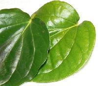Kalkatha Betel Leaf