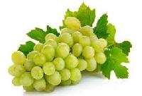 Fresh Indian Grapes