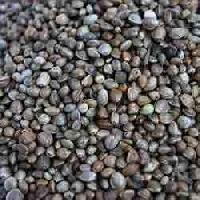 Sunn Hemp Seeds