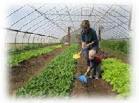 Farm House Development Service