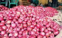 Nashik Lasalgaon Onion