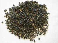 Sun Hemp Seed