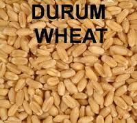 Durum Wheat