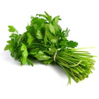Fresh Coriander Leaves