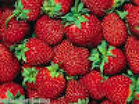 Indian Strawberry