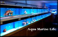 Imported Marine Aquarium Fishes
