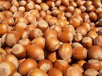 100% Organic And Natural Hazelnuts