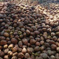 Pollachi Fresh Coconuts
