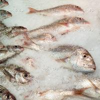Fresh Chilled Fish