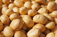 Good Quality Potatos