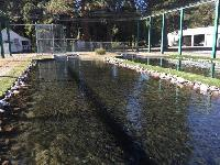 Fish Hatchery Services