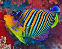 colorful marine fishes