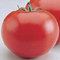 only hy tomato seed