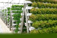 Hydroponic Construction Service