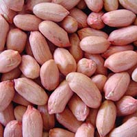 Boiled Peanuts Kernel - Krushi Food Industries