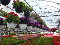 Floriculture Plant
