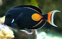 Marine Fishes