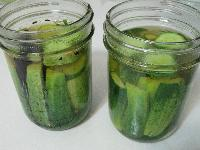 Fresh Pickled Gherkins