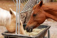 Equinex Horse Feed Supplement