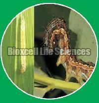 Bea-Boss Bio Insecticide