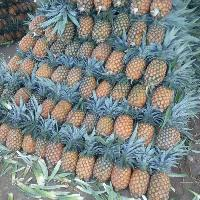 King Variety Pineapple