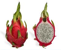 Pitaya The Dragon Fruit