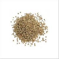Safed Musli Seed