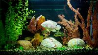 Aquarium Water Plants