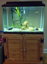 Wooden Fish Aquarium