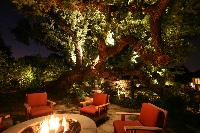LED Landscape Lighting for Tree
