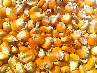 Yellow Maize (feed)