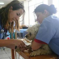 Veterinary Training Services