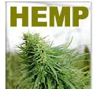 Hemp Oil, Seed And Powder