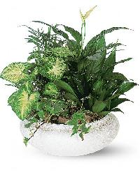 Garden Plant Manufacturers Suppliers Exporters in India
