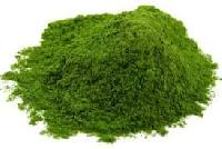 Dried Spinach Leaves Powder