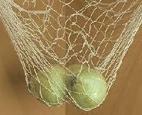 Fruits Basket Net