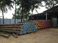 Timber Woods