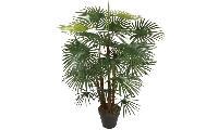 Pistol Palm Plant