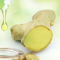 Ginger Oil Seed
