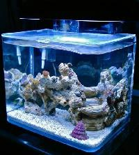 Bend Glass Aquariums