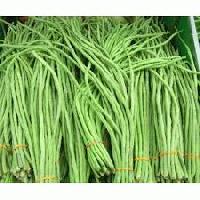 Long Beans Green
