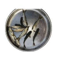 Rohu Fish Seeds
