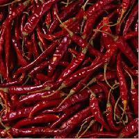 Indian Red Chilli