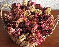 Dries Roses