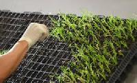 sugar cane seedling tray