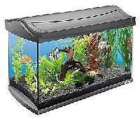 Aquarium Fish Tanks